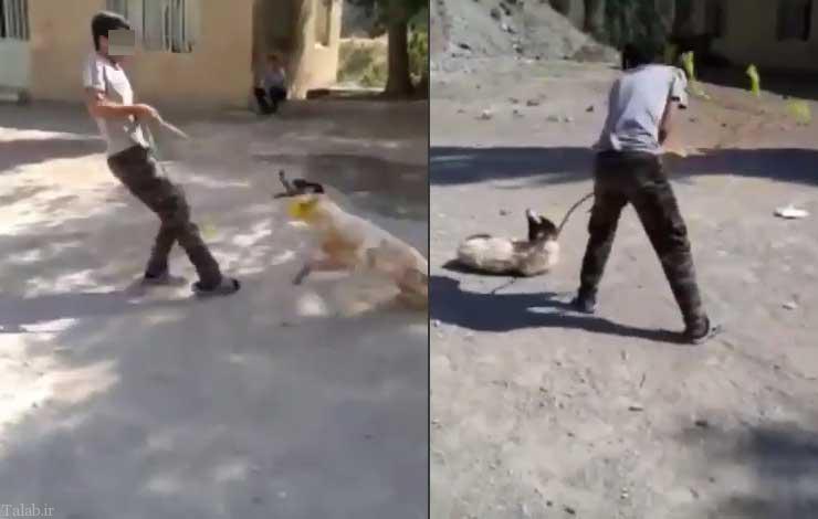 پلیس فتا این شخص حیوان آزار را دستگیر کرد