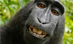 میمونی که از خودش عکس سلفی گرفت