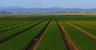 طرح کارآفرینی زراعت کوچک