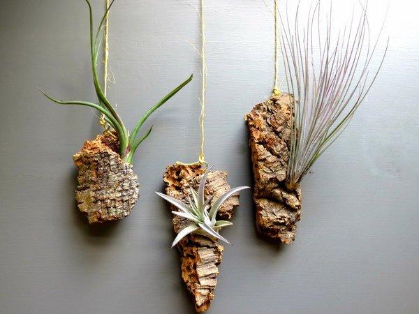 شرایط کلی نگهداری از گیاهان هوازی