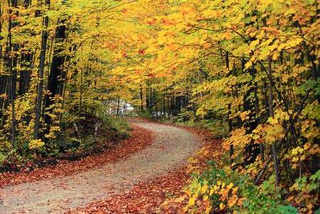 جنگل راش مازندران