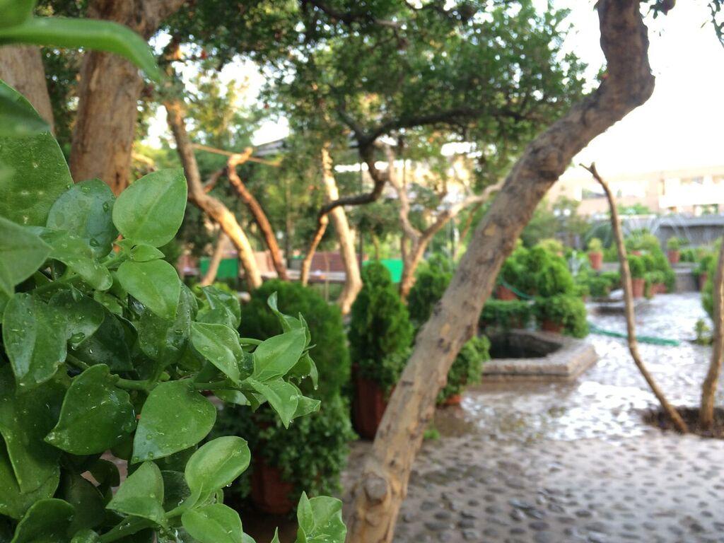 رستوران باغ شانار / عکس شماره 4