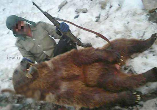 شکار یک خرس قهوه ای کمیاب در کلاردشت