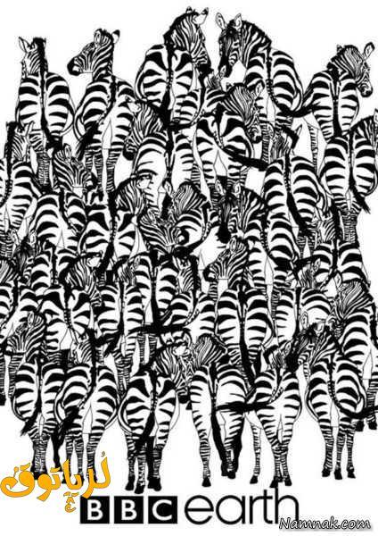 معمای تصویری ، مرد پنهان بین گوره خرها را پیدا کن + جواب