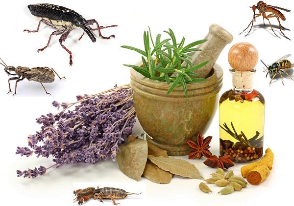 مقاله روشهاي كنترل حشرات با استفاده از گياهان دارويي