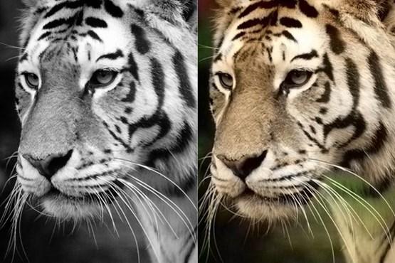 تبدیل عکس سیاه وسفید به رنگی