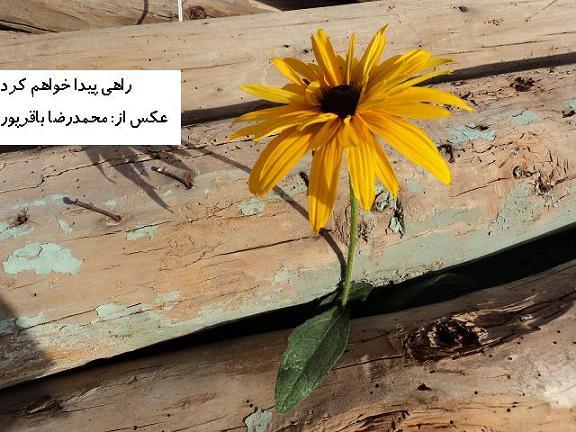 راهي، پيدا خواهم كرد...(محمدرضا باقرپور)