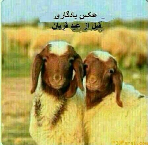 عکس برای عید قربان برای پست تلگرام و اینستاگرام