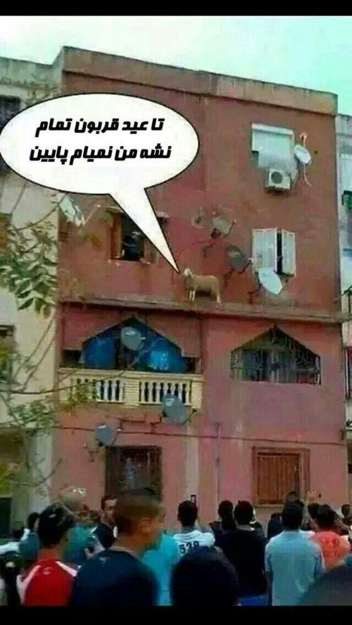 عکس خنده دار عید سعید قربان