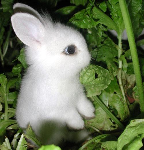 عکس خرگوش سفید کوچولو و بامزه برای پروفایل