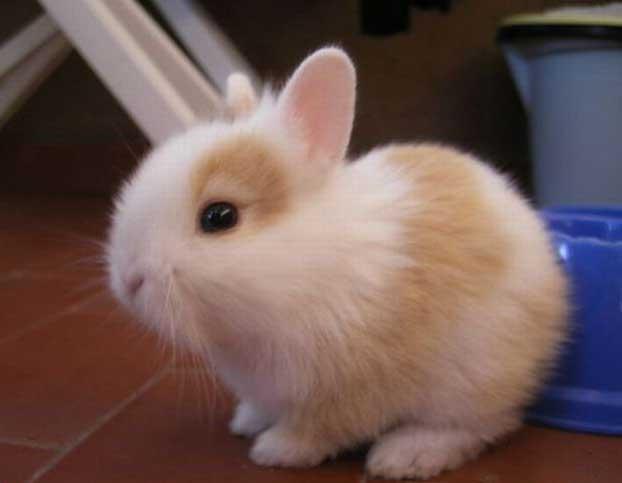 عکس زیبا ترین خرگوش برای پروفایل