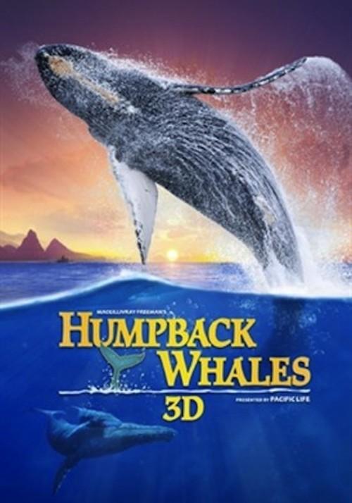 دانلود رایگان مستند Humpback Whales 2015