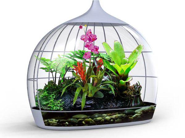 بهترین گیاهان برای تراریوم