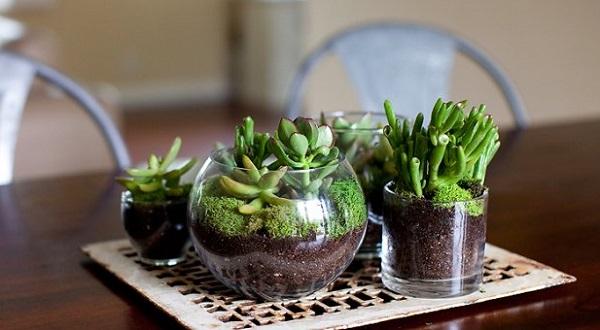 روش ساخت تراریوم یا باغ شیشه ای یا باغ مینیاتوری