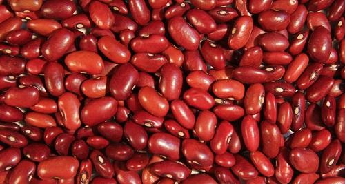 خواص گیاعان/Kidney bean لوبيا
