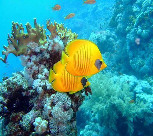 عکس ماهی برای پروفایل