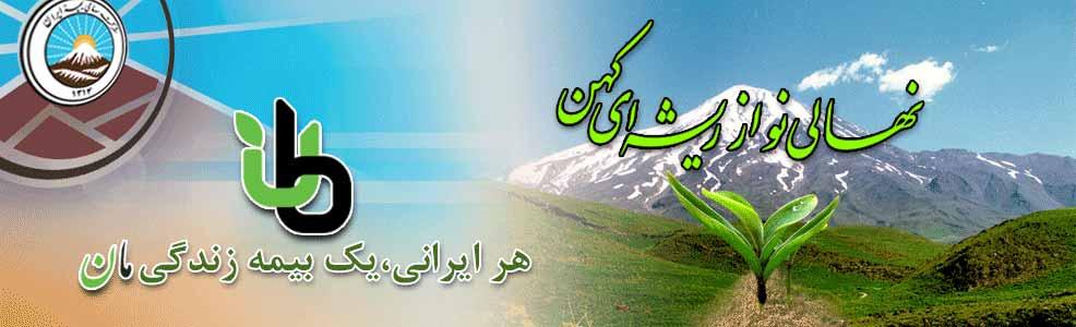 هر ایرانی یک بیمه زندگی مان