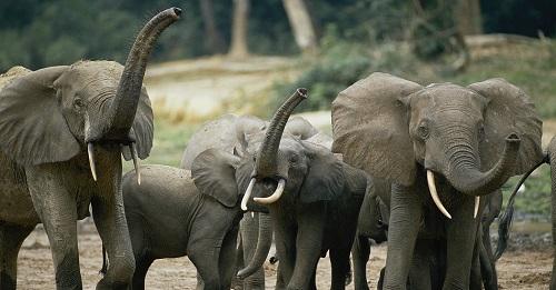 شِکار یا نخجیر به معنی کشتن یا به چنگ آوردن موجودی زنده توسط موجود زندهٔ دیگر است