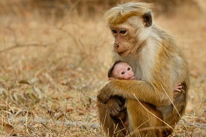 میمونها از نسل پیشمیمونیان پدید آمدهان