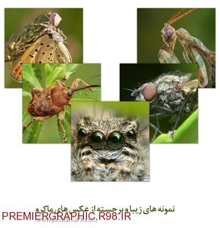 نمونه های زیبا و برجسته از عکس های ماکرو