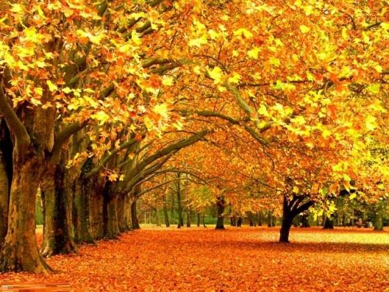 شروع پاییز