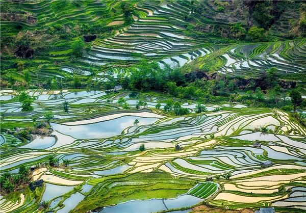 زیباترین مزارع برنج جهان در چین