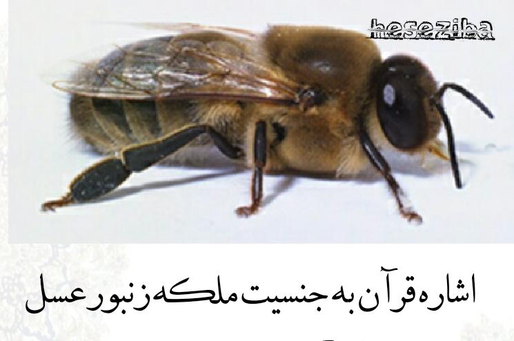 اشاره قرآن به جنسیت ملکه زنبور عسل