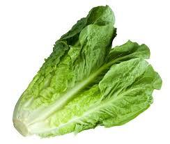خواص دارویی و فواید غذایی كاهو  : Lettuce