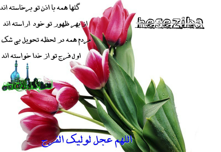 گلها....