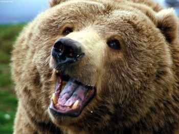 فیلم بوسیدن و حمله خرس به مربی زن در سیرک