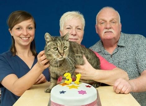 جشن تولد 31 سالگی پیرترین گربه جهان + تصاویر
