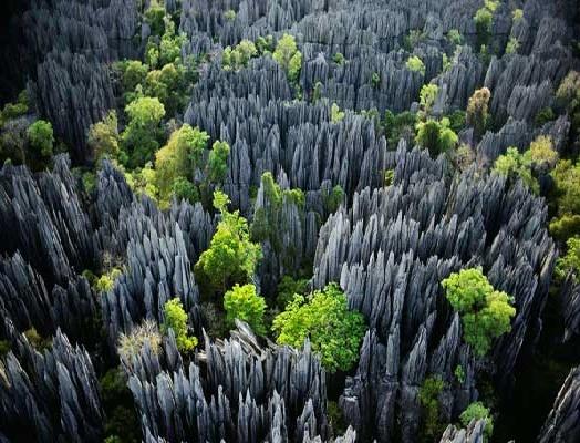 سفری هولناک به جنگل سنگی