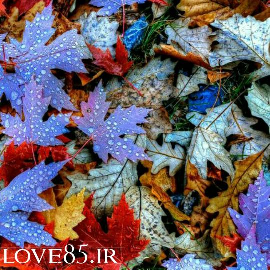 متن جدید عاشقانهٔ صدای آمدن پاییز