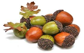 میوهٔ بلوط: نشاسته، پروتئین، قندهای مختلف مخصوصاً کوئرسیت، مادهٔ روغنی و بالاخره تانن دارد.