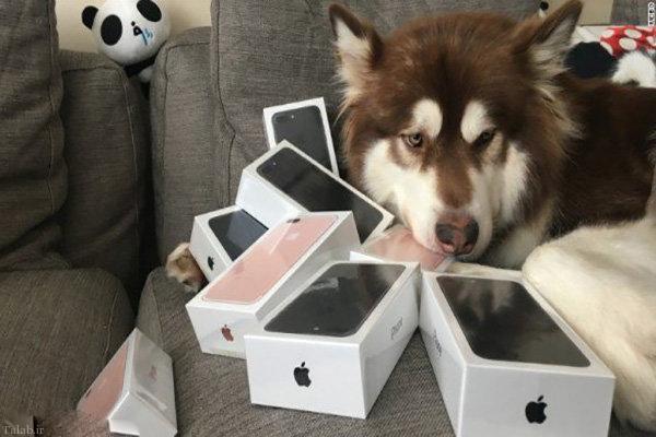 سگی که دارای 8 گوشی آیفون 7 است (+عکس)
