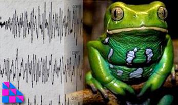 پیش بینی زمین لرزه توسط حیوانات