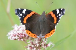 باور می کنید این عکس زیبا از بال یک پروانه باشد؟