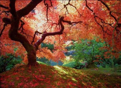 چشم اندازهای شگفت انگیز از پاییز رنگارنگ
