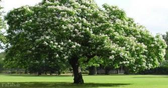 شرایط نگهداری درخت جوالدوزک