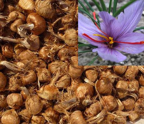 زعفران به جهت طعم، بو و رنگ زرد خاصی که دارد به وفور در غذاها (به ویژه همراه با برنج)، صنایع شرینیسازی، داروسازی و صنایع دیگر به مصرف میرسد.