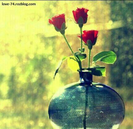 عکس گلدان و گل-عکس گل رز-عکس گل قرمر-عکس گل قشنگ-عکس گل محمدی-عکس گلخونه
