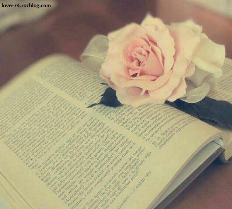 عکس گل لای کتاب-عکس کتاب خواندن-عکس کتاب عاشقانه