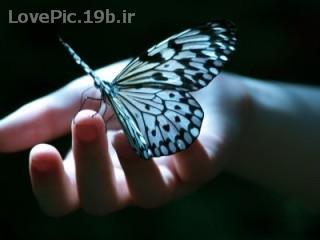 عكس عاشقانه پروانه