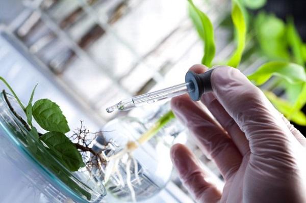 بيوتكنولوژي در گياهان دارويي