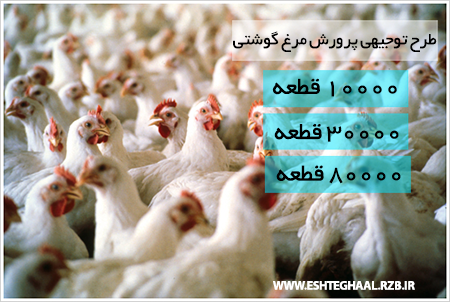 طرح توجیهی پرورش مرغ گوشتی