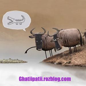 http://rozup.ir/view/2059913/video-animation-do-gav-temsah-t.jpg