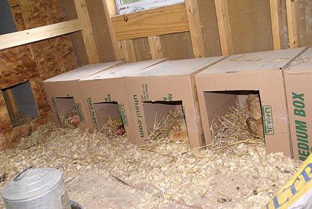 آمورش پرورش مرغ