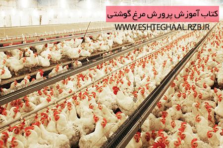 آموزش پرورش مرغ گوشتی