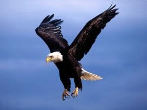 داستان کوتاه عقاب