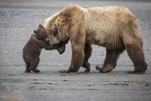 عکس های تفریح خرس مادر با فرزندانش در طبیعت